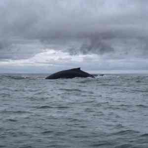 Wale Nuqui Kolumbien