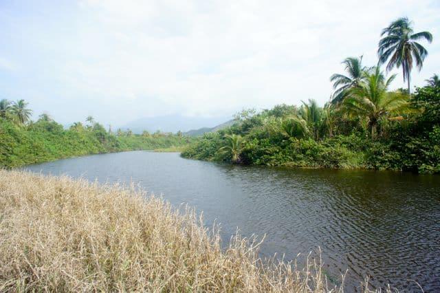 Palomino Flussmündung im Paradies