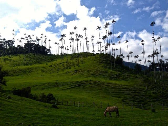 Salento/Valle de Cocora