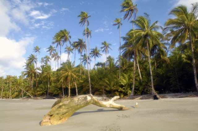 Isla Gorgona Pazifik Nationalpark