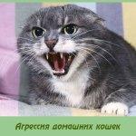 Агрессия домашних кошек