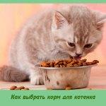 Как выбрать корм для котенка