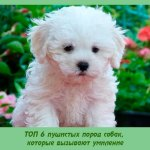 ТОП 6 пушистых пород собак, которые вызывают умиление