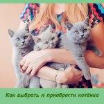 Как выбрать и приобрести котёнка