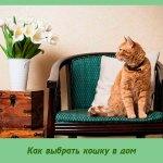 Как выбрать кошку в дом