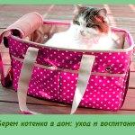 Берем котенка в дом: уход и воспитание