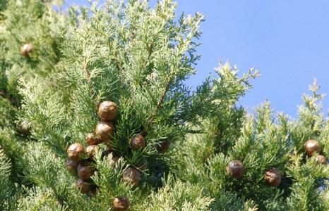 サイプレス(Cypress)
