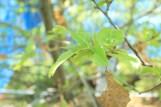 yamamayu