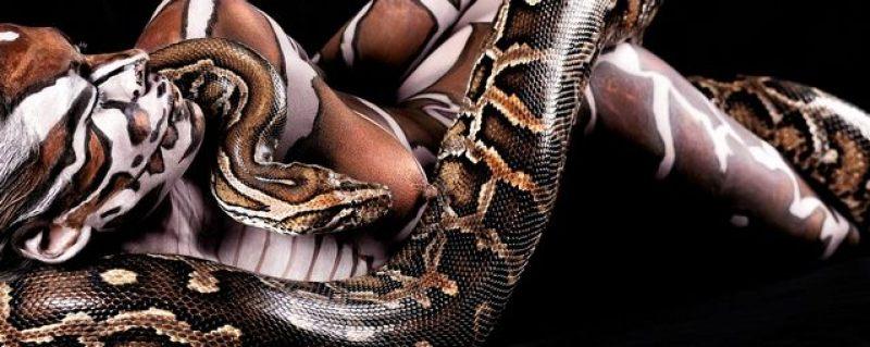 ani-human burmese python