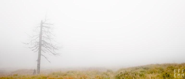 """Frank Meinel """"Bäume im Nebel"""""""
