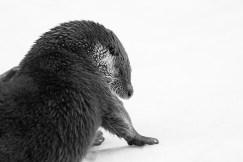 """Frank Brehe """"Otter"""""""
