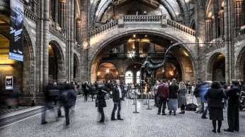 "Frank Brehe ""Natural History Museum I"""
