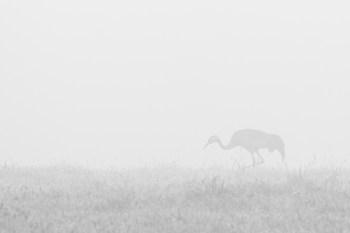 "Frank Brehe ""Kranich im Nebel"""