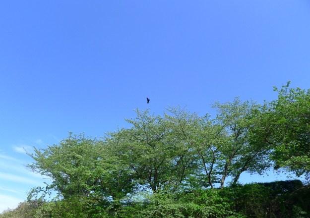 鬼面池公園 2012年4月26日