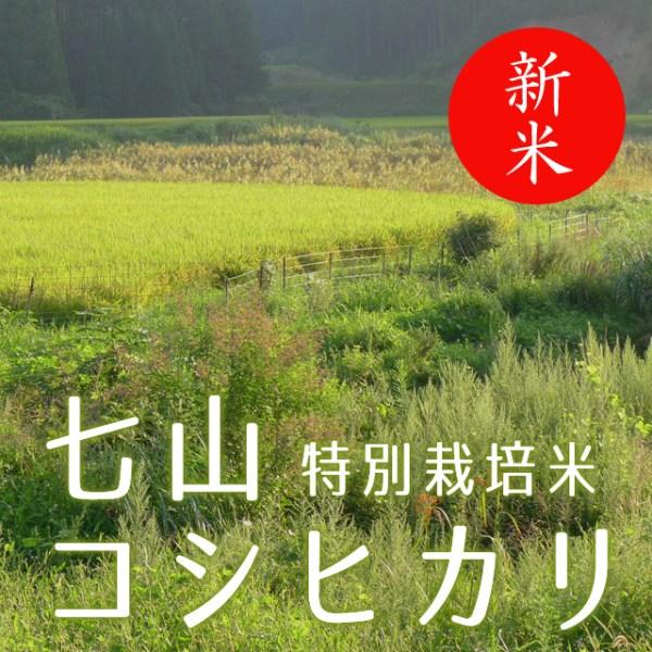 七山コシヒカリ