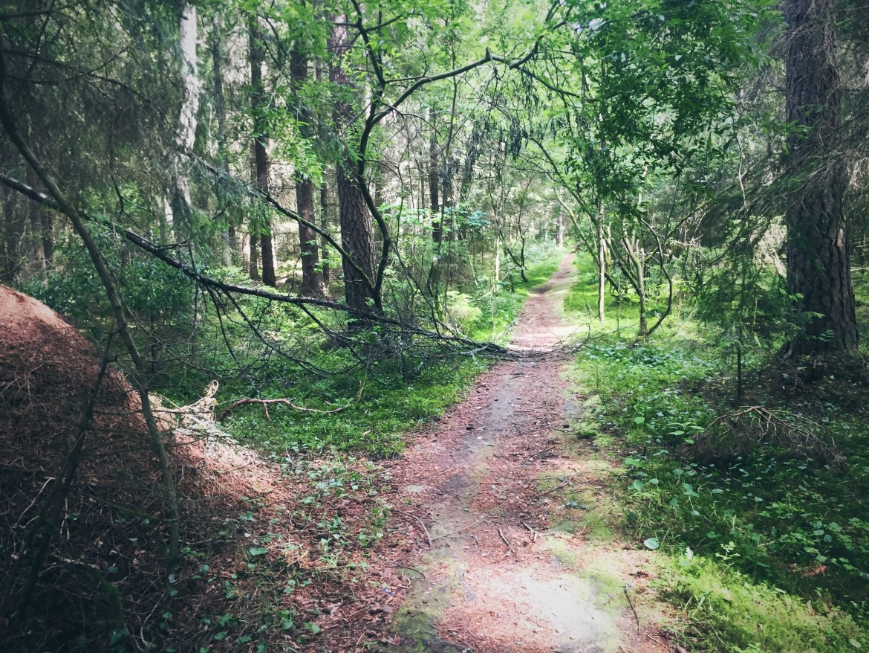 En skog