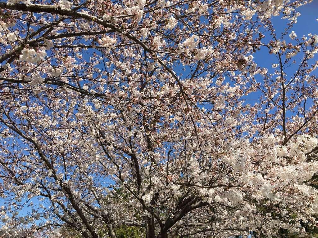 法人客の開拓は春にやる方がカンタン