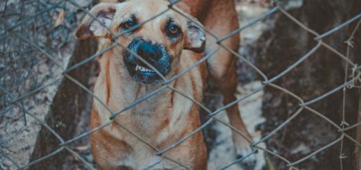 Keine Hundesteuer für adoptierte Vierbeiner aus dem Tierheim