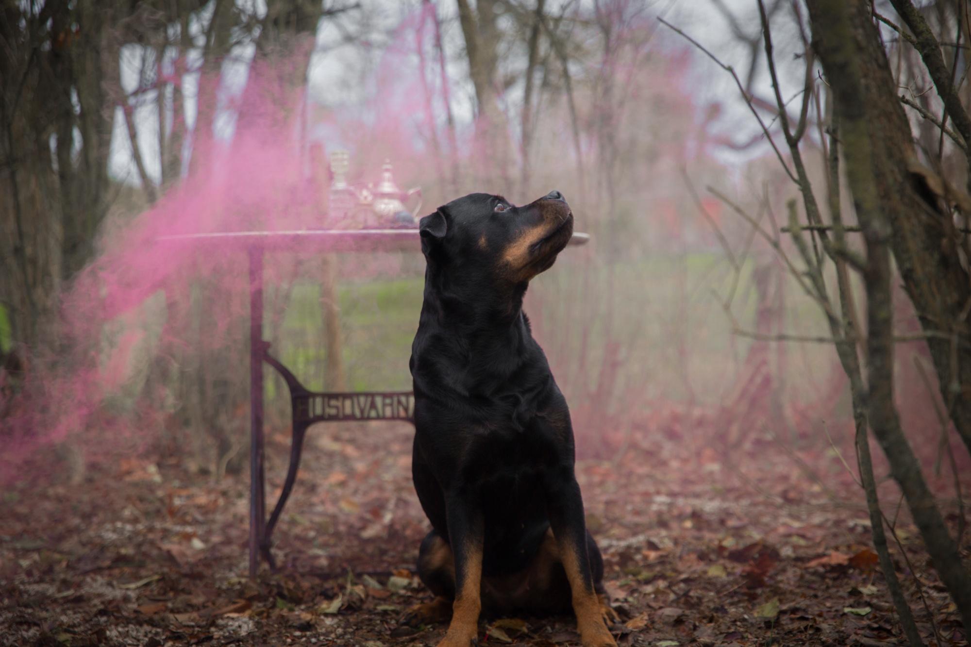Välkommen till ett hundvänlig nyårsfirande