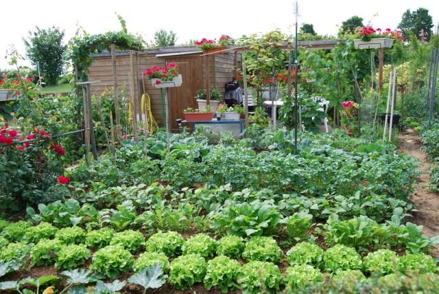 Jardins-Familiaux-Ris-Orangis
