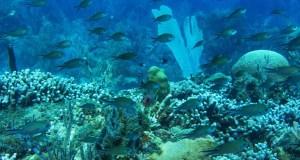 Kadir van Lohuizen/NOOR/PNUE Les écosystèmes des récifs coralliens abritent 25% de la vie marine et nourrissent des centaines de millions de personnes. Un récif en bonne santé dans la baie de Molinere dans une aire marine protégée à Grenade.