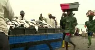 Capture d'écran d'un reportage sur la pêche en Mauritanie de Africa News sur YouTube.