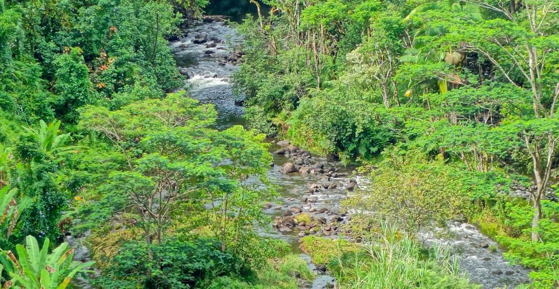 Akaka Falls / KonaNature.com / 1-844-566-2628