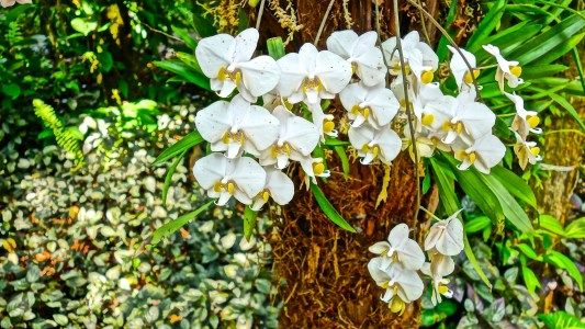 Orchids / KonaNature.com / 1-844-566-2628