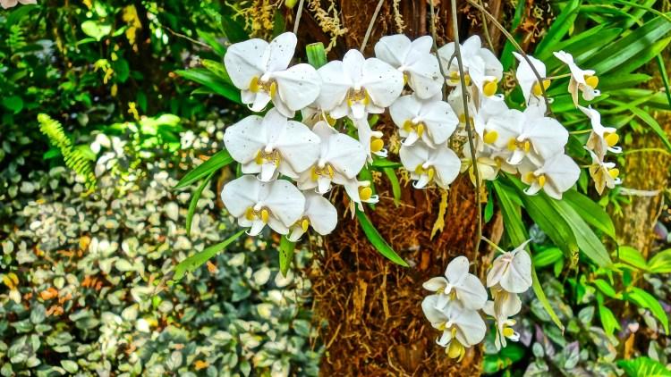 Orchids / KonaNature.com / 1-844-566-2628