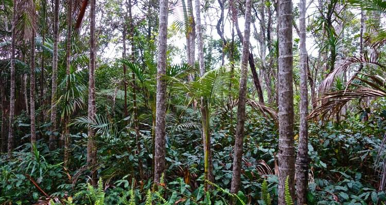 Kona Cloud Forest Sanctuary / KonaNature.com / 1-844-566-2628