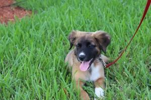 How Do Choose a Dog Trainer? Dog Training Tempe, AZ