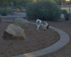 Akita Training Scottsdale, az