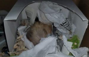寝ているハムスター