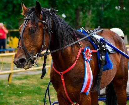 Тамбовские Большие – Хреновской конный завод