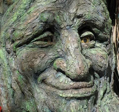 """O Złotym Encie, Królu Drzew Wszelakich — akcja """"Bajki przy kominku"""" Image"""