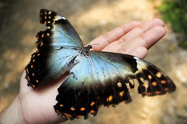 Gdy motyle wbrzuchu umarły Image
