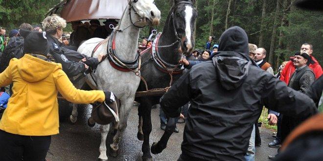 Sprawa domniemanego znęcania się nad końmi umorzona