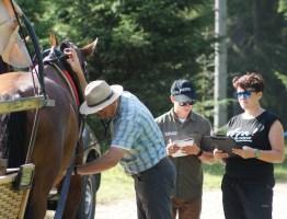 Konie pomyślnie przeszły badania.