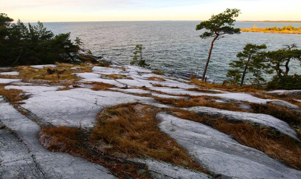 Pine trees in Porkkala