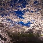 夜桜デートで何する?具体的なプランの立て方や持ち物を解説するよ!