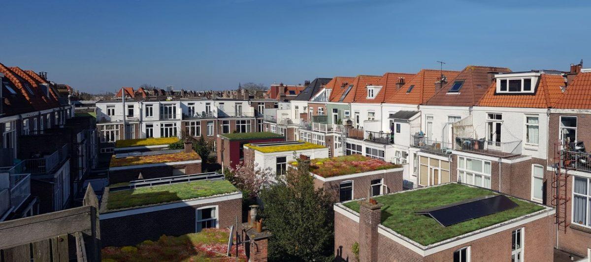 Actie Groene Dakenjacht van Duurzaam Den Haag