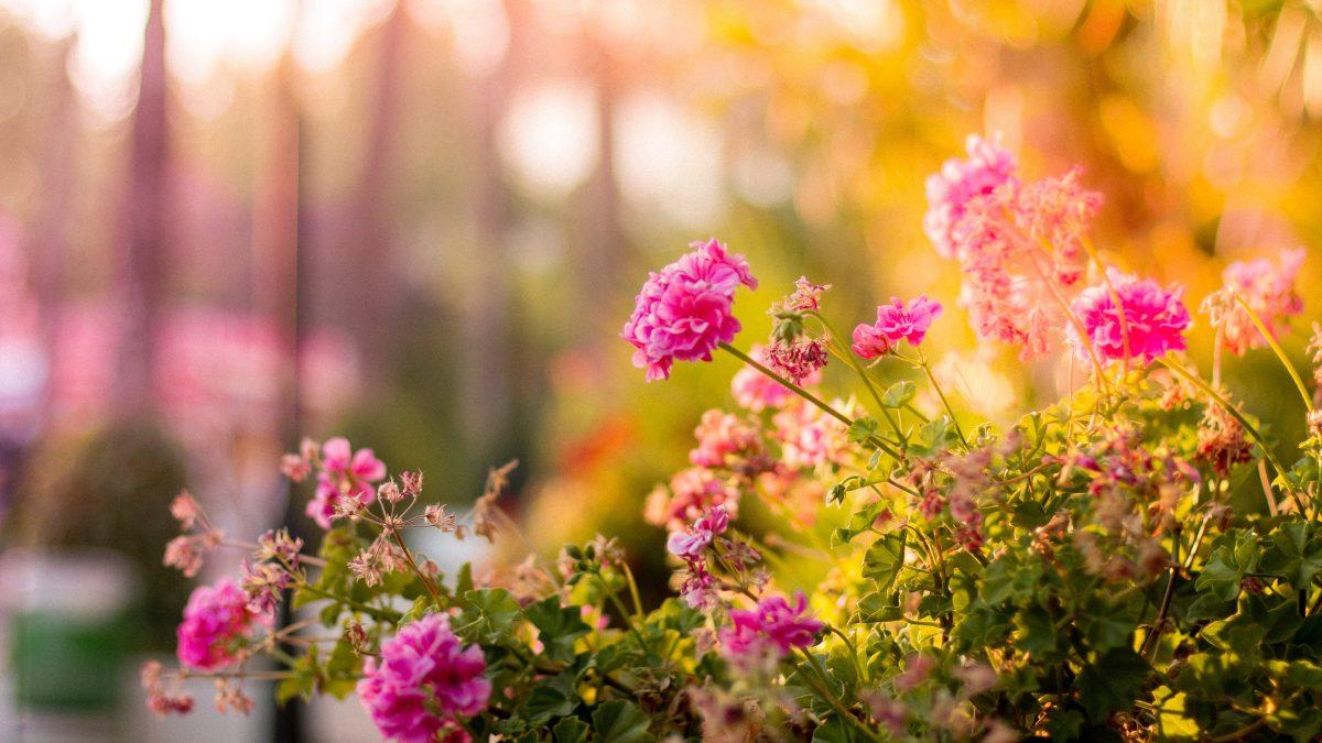 21 maart: een nieuwe lente, meer groen in ReVa?