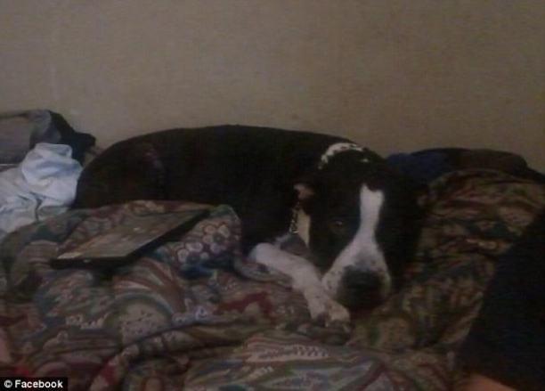 Amber Finney's dog1