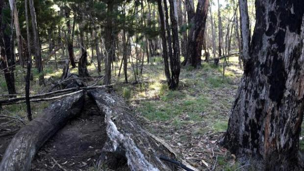 Karen Ristevski_s badly decomposed body was found in the Macedon Regional Park