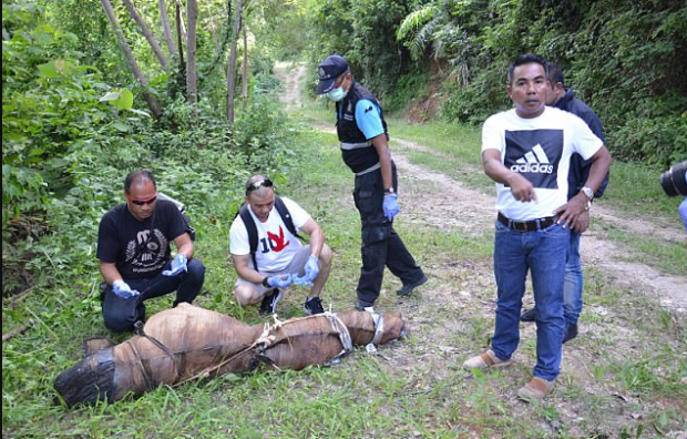 Nampadung decomposed body was found wrapped in a rug bound in duct tape and dumped deep in the jungle in Phuket, Thailand, on Sunday.png