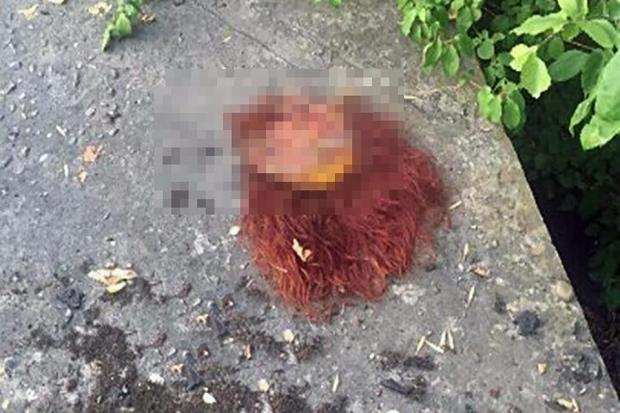 Woman's body parts found in Krasnodar 2