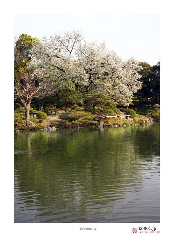 清澄庭園02