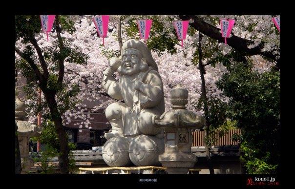 神田明神の桜02