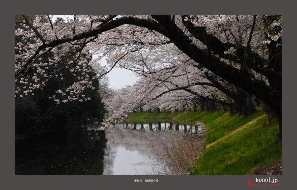 福岡堰04