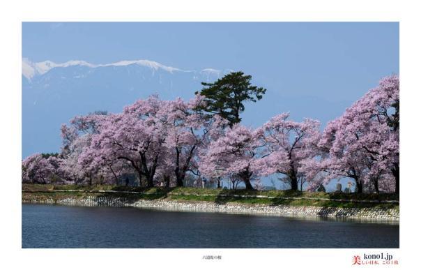 六道堤の桜02
